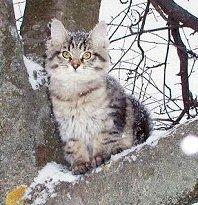 Maatiaskissan pentu Venäjällä